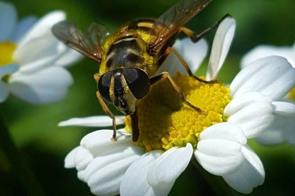 Adler Blechbearbeitung bietet Bienen Lebensraum